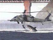 Žralok vrtulník hoax