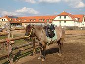 Pražákům se daří i odchov huculského koně.