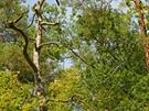 Křivoklátsko, Údolí ticha. Kouzlo smíšených lesů vynikne s přicházejícím...