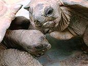 želva obrovská 2
