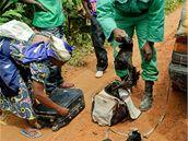Strážci biosférické rezervace Dja v Kamerunu chrání gorily, slony a další zvířata. Nasazují vlastní životy, přitom jim chybí výbava, aby mohli čelit nájezdům ozbrojených pytláků.