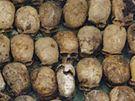 Lebky obětí genocidy nalezené v masovém hrobě u vesnice Nyabikenke.