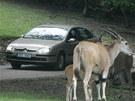 Safari s auty ve Dvoře Králové