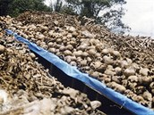 Hromady ostatků obětí genocidy v Kiali.
