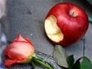 Nakousnut� jablko, p�ipom�naj�c� slavn� logo Applu le�� spolu s kv�tinami p�ed
