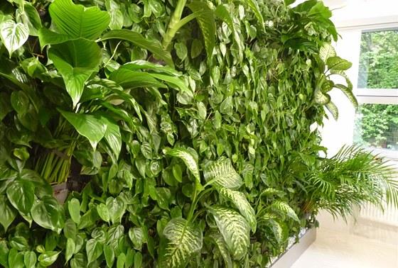 Vertik�ln� zahrady vy�aduj� pravidelnou p��i, vzorkovna firmy N�mec - luxusn�