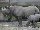 Manny, mládě nosorožce dvourohého, s matkou