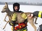 Hasičská záchrana srny ze zamrzlého Záblatského rybníka v Bohumíně na
