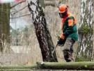 Tvrdili, že se zbytečně kácí i zdravé vzrostlé stromy, navíc se měl průklest...