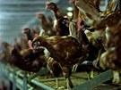 Na farm� v Ratí�kovicích produkují vejce od slepic chovaných v nových tzv....