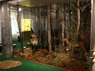 Olomoucké Vlastivědné muzeum se po velké proměně za 71 milionů korun znovu