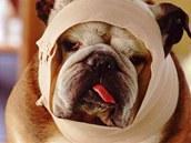 Nemocný pes, ilustrační snímek