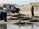 Mrtví delfíni na pláži San José nedaleko města Chiclayo v Peru (6. dubna 2012)
