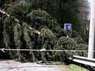 Hasi�i odstra�ovali spadan� stromy v Olomouck�m kraji od sobotn�ho r�na.