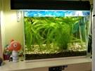 Do studentského pokoje se vešlo i akvárium.