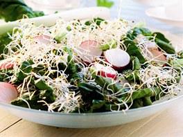 Špenátový salát s klíčky a ředkvičkami