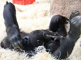 Kiburi se svojí starší sestrou Mojou (než odjela v listopadu loňského roku do