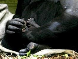 Chelewa přesně ví, jak s mládětem zacházet.