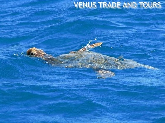 Ostrov Zakynthos láká na želvy, tyrkysové moře a bary2