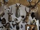 Preparátorské studio Michala Fišera je plné kůží a vycpaných zvířat.