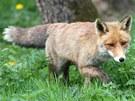Stanice ochrany přírody a fauny v Pavlově