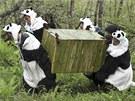�ín�tí výzkumníci od�ni do pandích kostým� p�ená�ejí ani ne dvouletou pandu Tao...