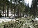 Mostek v Labsk� roklin� nevydr�el n�por lavin a vody z taj�c�ho sn�hu.