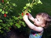 Řada mladých rodin chce svým dětem dopřát vlastní ovoce.