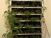 Hydroponní pěstování  během testování