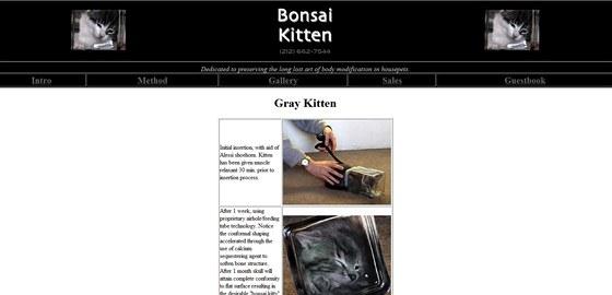Šedé koťátko nabízel web bonsaikitten.com v čtyřhranné lahvičce.