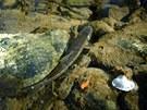 I kdy� nepat�� mezi objekt z�jmu ryb���, je to n�dhern� rybka.