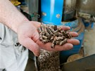 Zbytky rostlinné výroby využívá farma na výrobu pelet. Odpad tak jde využít