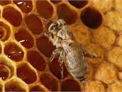 Med je čistě přírodní produkt, vytvořený včelami - jen tak obsahuje vitamíny a