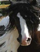 koňské žíně