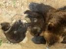 Kamčatka vyšla poprvé od lednového porodu se svými potomky Kubou a Tobym do
