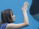 Film Rust and Bone (Rez a kost), Marion Cotillard