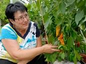 Úspěšná pěstitelka se silnými a kompaktními rostlinami paprik, jaké se jí