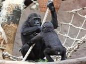 Tatu si hraje s mladším bratrem Kiburim úplně stejně, jako si před pár lety