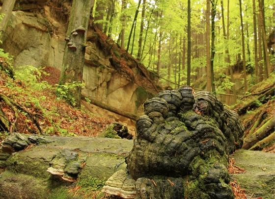 Popadané stromy budete v Pivnické rokli překračovat neustále.