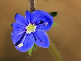 Na loukách nad Pivnickou roklí roste spousta nádherných kytek.