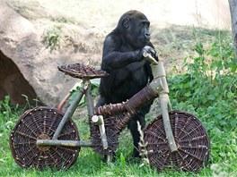 Tatu si kolo sice intuitivně vede, jako kdyby na něm jezdil odjakživa, ale...