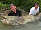 Stokilový sumec má podle rybářů statnou stavbu těla.