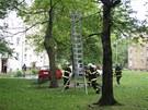 Hasiči museli chlapce, který se nemohl dostat dolů ze stromu, zachraňovat