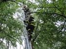 Hasiči museli chlapce, který se nemohl dostat dolů z větve v koruně stromu ve