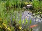 V menším jezírku žije jeden bílý a několik červených kaprů, proto je opatřené vzduchováním určeným pro akvária; zvládne zajistit i to,  aby jezírko v zimě nezamrzlo.