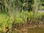 Jezírko ještě není po zimě vyčištěné od suché trávy a podobně, což nevadí nai majiteli, ani jeho obyvatelům: užovkám, čolkům či rosničkám.