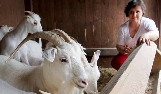 Kozí sýr Sedlák z farmy v Šošůvce se stal jedním z vítězů regionálního produktu na jihu Moravy. Na snímku Eva Sedláková u svých zvířat.