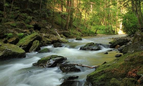 V samotném toku Kamenice se střídají úseky s velmi rychle tekoucí vodou,