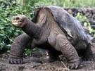 Osam�l� George, stolet� �elva slon� z Galap�g na archivn�m sn�mku