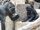 Bikira a dvouletý Kiburi si začali budovat pěkný vztah.